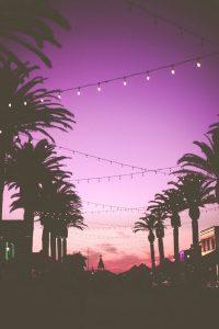 Palmy, widok na fioletowe tlo