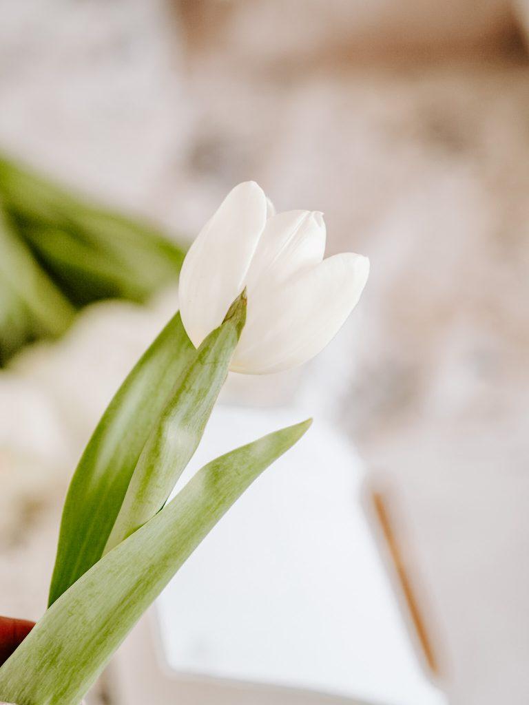 MINIMALIFE tulipan